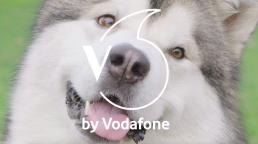Cane- V-Pet Vodafone